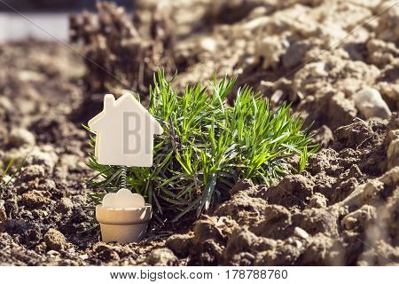 House model minature on earth background with green grass. Real estate rent sale or buying property concept
