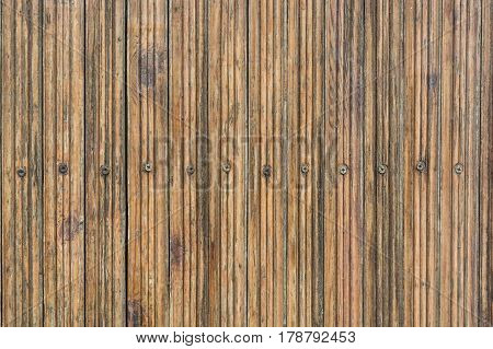 High resolution old obsolete rustic timber surface with caps of nails