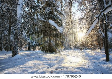 various objects of the winter season and lanscape in the best of this wonderful period