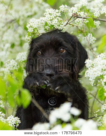 Cute black mutt dog with funny face sitting on spring meadow.