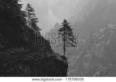 Tree growing on the edge of a cliff. Scene near Namche Bazar Nepal.