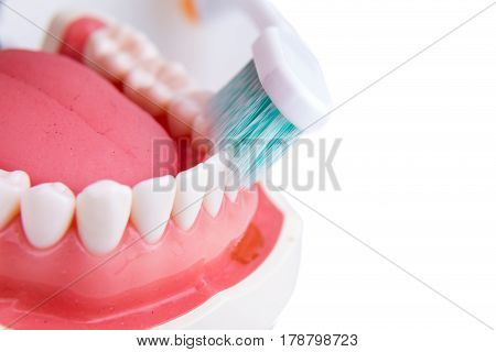 Demonstration On Soft And Slim Tapered Bristle Toothbrush Brushing Teeth