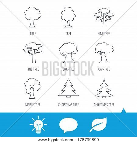 Pine tree, maple and oak icons. Christmas trees linear signs. Forest trees flat line icons. Light bulb, speech bubble and leaf web icons. Vector