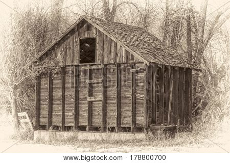 old, small barn in an abandoned farm in Colorado with a  riparian cottonwood forest in background, damaged wood shingles on a roof, retro sepia opalotype processing