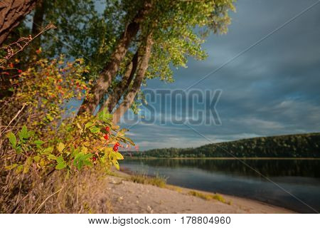 Trees and gooseberry bush on the bank of river. Focus on the red gooseberry