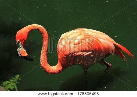 Flamingo. The image was taken in Florida National Park