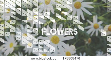 Flowers Bloom Nature Freshness Concept