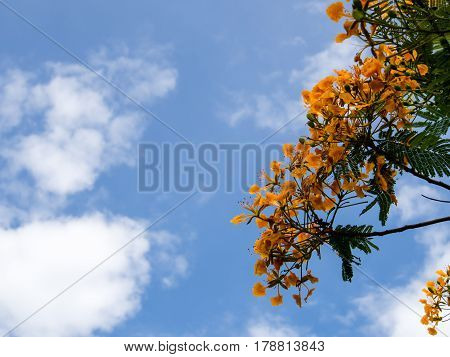 Branch of tree and flower on cloud and blue sky background