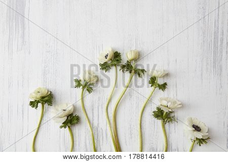 Beautiful white flowers on concrete background