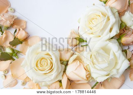 Composition of tender flowers over white background