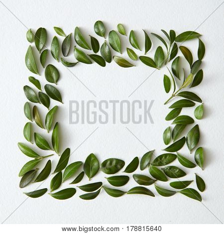 Blank space arranged with green leaves in square shape
