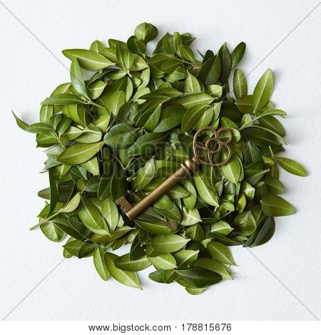 Green leaves arranged in round shape with vintage key