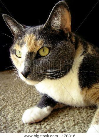An Alert Cat