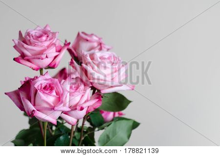 bouquet of  fresh pink roses on uniform background