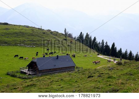 Travel To Sankt-wolfgang, Austria. The View On The Green Mountains Meadows With A House And The Cows