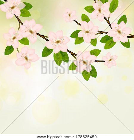 Blooming branch vector with pink spring blossom. Card with text place. Cherry flower blossom branch, peach bloom, sakura branch.