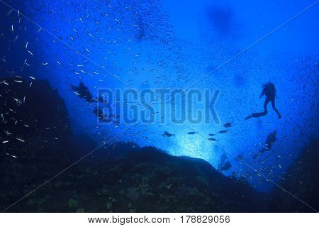 Scuba dive coral reef and fish