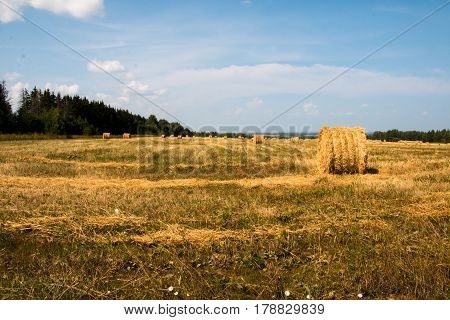 Field And Yellow Straw In Autumn Day