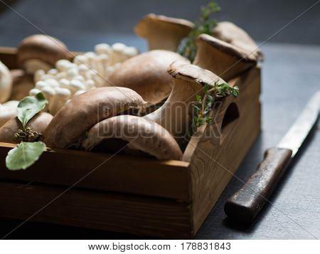 Various raw mushroom types  - Portobello mushrooms, eringi, champignons,  Shimeji mushrooms in a wooden tray