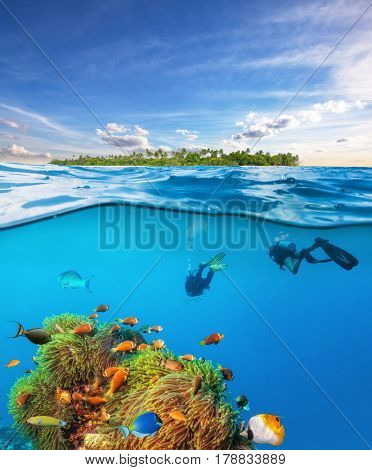 Group of divers below the water surface exploring sea life, underwater photography with beautiful anemon and colored fish