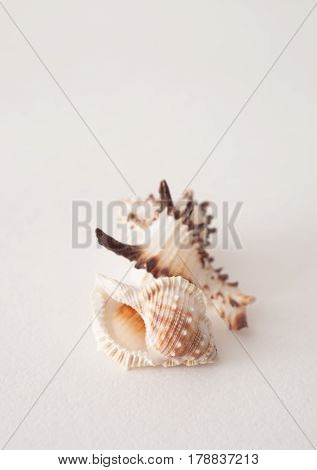 Sea Shells On A White Background