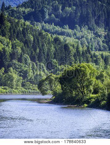 Striy river at the Carpathian spruce forest in Ukraine