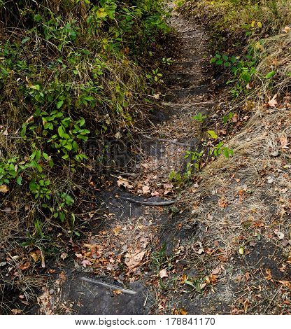 close-up of the hiking trail in mountain forest