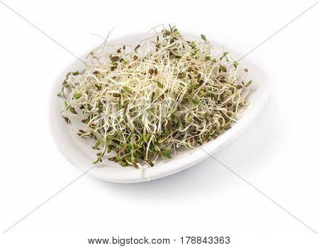 the fresh alfalfa shoots in white bowl