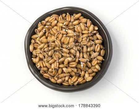 sprouted wheat germ in a bowl isolated on white background