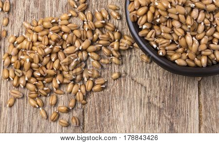 sprouted wheat germ in a bowl over rustic wooden background