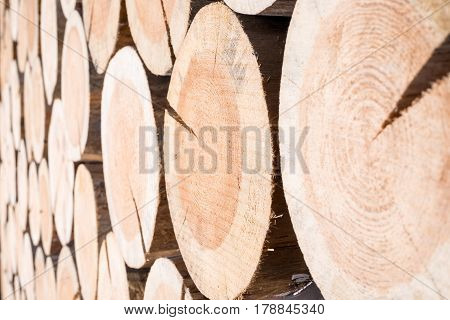 Horizontal background of wood logs of different sizes in one plane as the outgoing prospect
