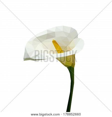 Isolated flower of white calla composed of triangles on white background.
