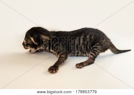 Little blind newborn baby kitten meowing on a white background