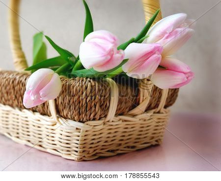 Pink tulips in Carmine. Still life with bouquet of pink tulips in a basket.