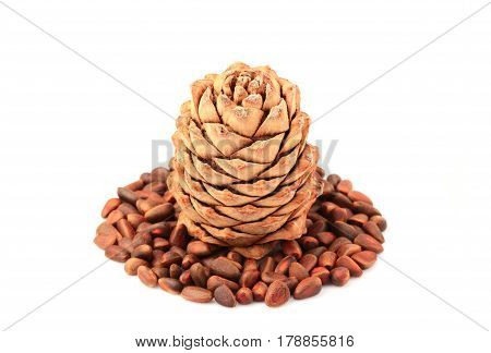 Cedar cone with nuts isolated on a white background.