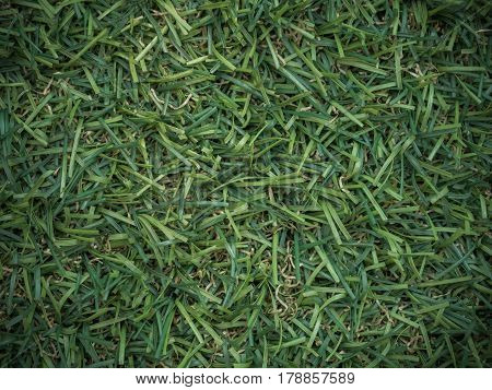 close up Pattern Of green Artificial turf