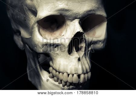 Human skull isolated on dark background horror concept