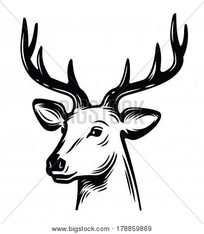 emblem young deer vector on white background