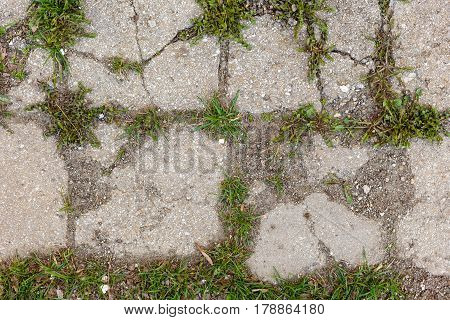 The Texture Of The Old Cracked Asphalt. Grass Grows From Cracks In The Road.