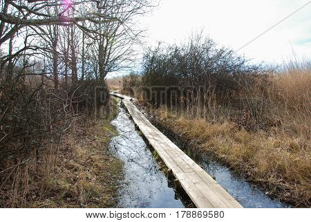 Rustic wooden footpath through a wetland at springtime
