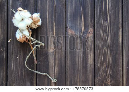 large Flowers of cotton on wooden table