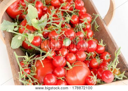 Cherry Tomatoes And Their Big Cousins In A Wooden Basket