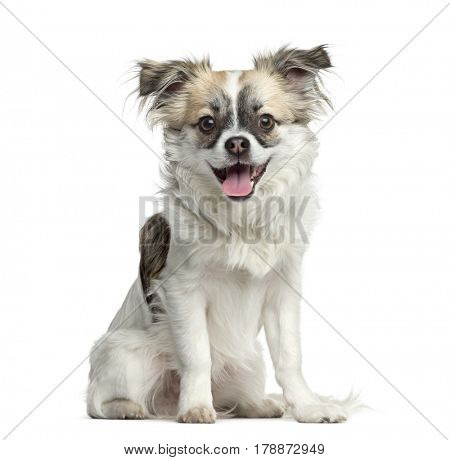 Mixed-breed dog sitting and panting, 3 months old, isolated on white