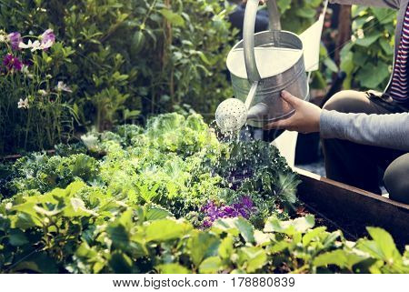 Woman watering organic fresh agricultural product