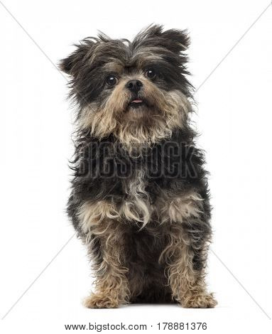 Mixed breed dog sitting, 4 years old, isolated on white