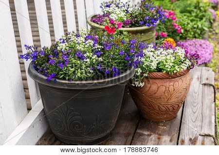 A collection of flower planters in the summer garden.