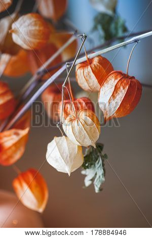 Bouquet Of Bright Red Dry Physalis Husk, Close Up