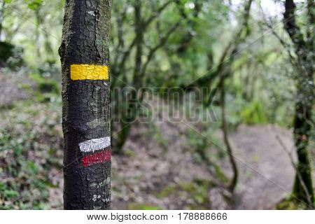 a yellow mark for a local path and the characteristic white and red stripes of a GR path marked in a tree in the Garrotxa Volcanic Zone Natural Park, in Olot, Province of Gerona, Spain