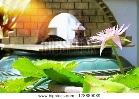 Beautiful lotus blooming abstract in the nature garden background