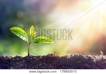 Young Plant Growing In Sunlight- concept of agriculture